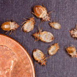 Bedbugs: From the Past to the Future