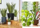 Indoor Plants for Fantastic Air in Home and Office